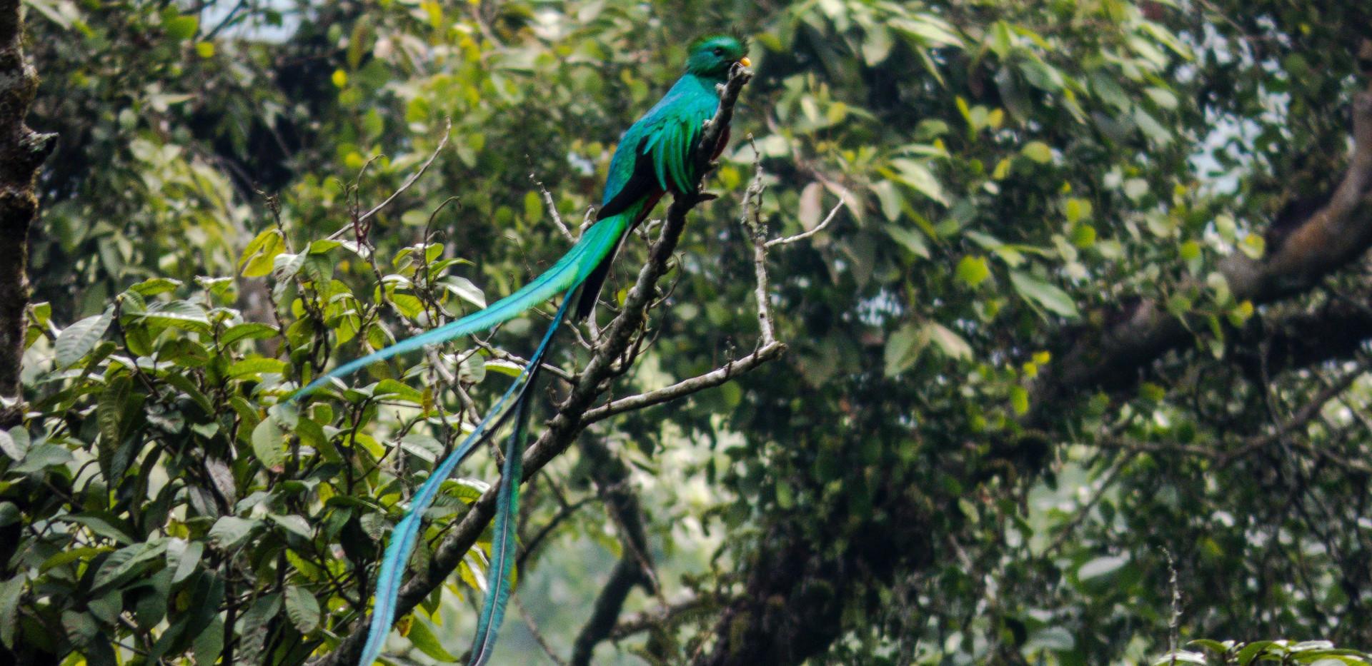 Quetzal 5-5-18.jpg