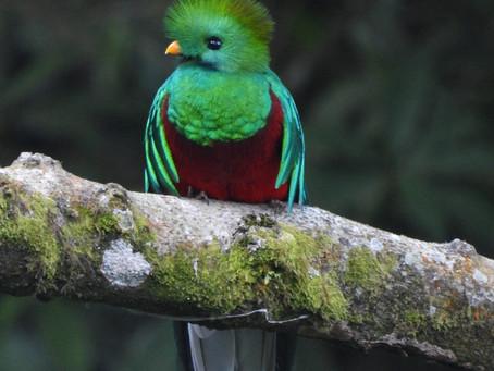 Tour del Quetzal.