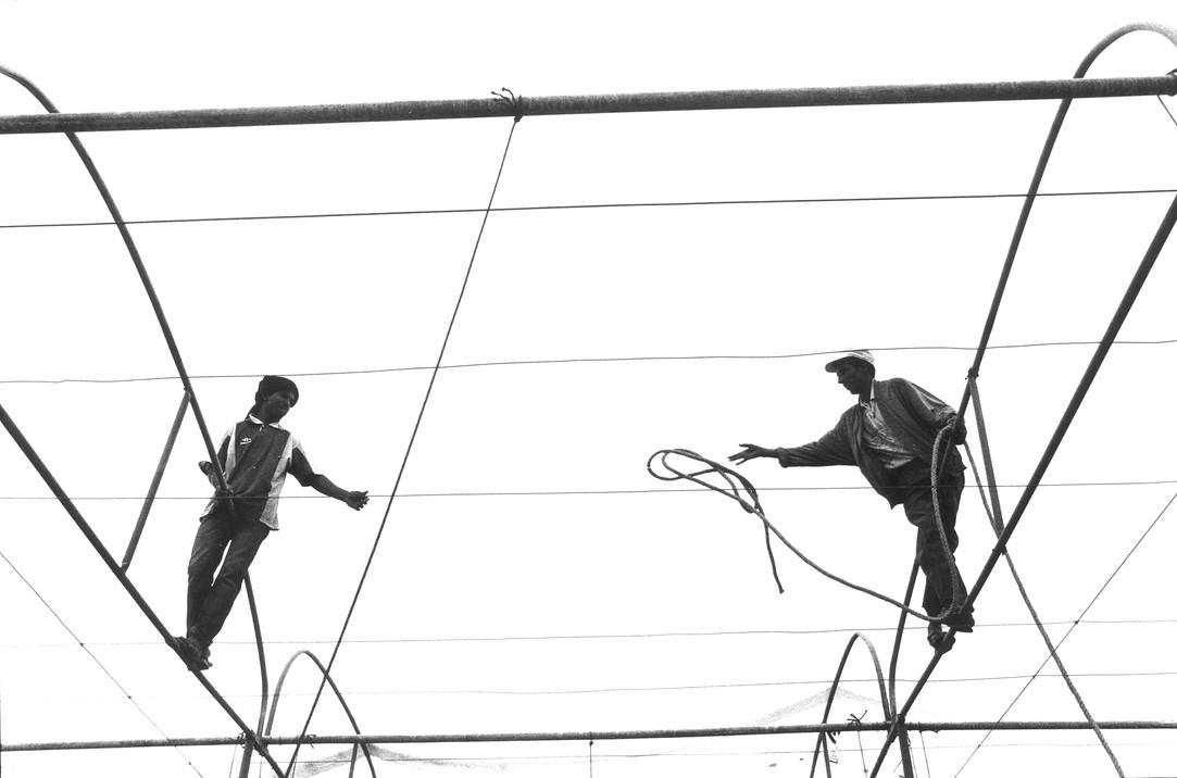 acrobaties rurales #5