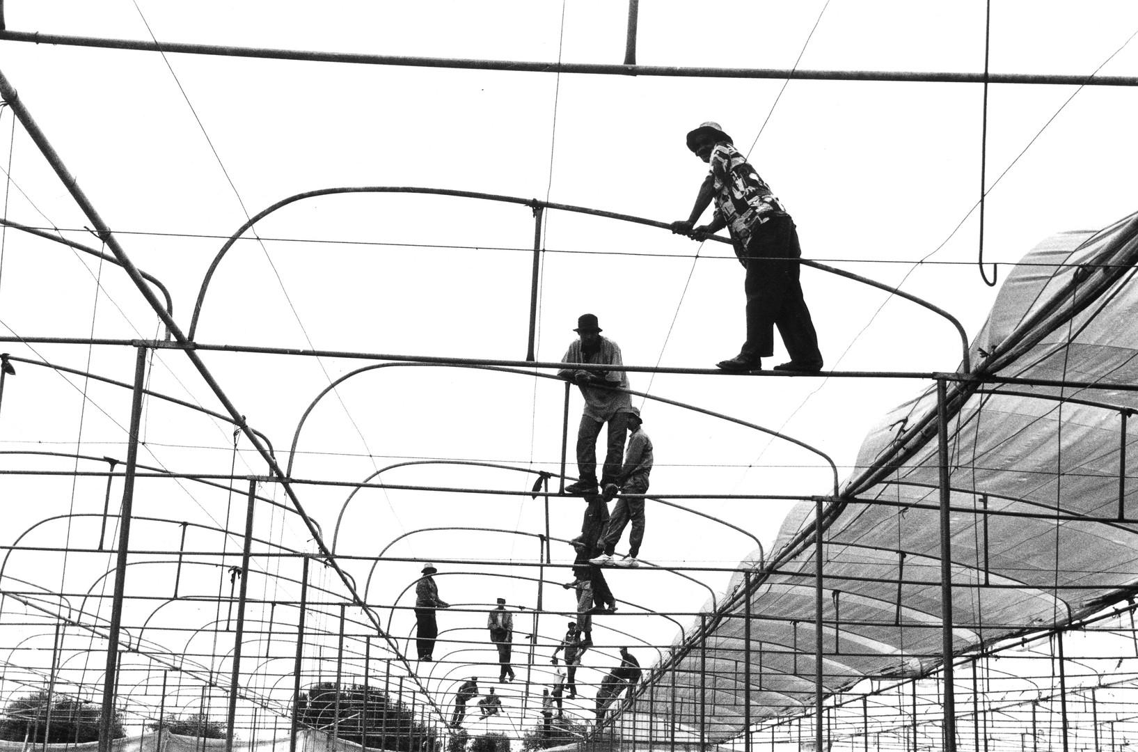 acrobaties rurales #8