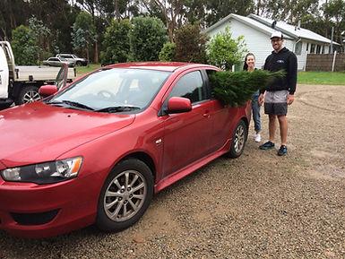 CAR TREE.JPG