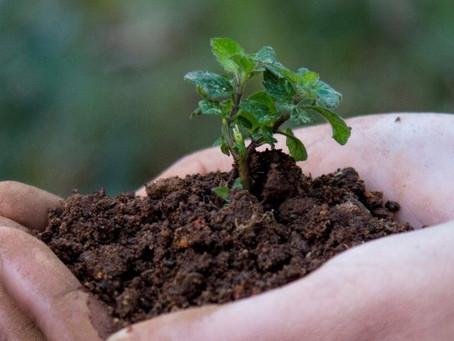 Agro-entrepreneurship Grows Money