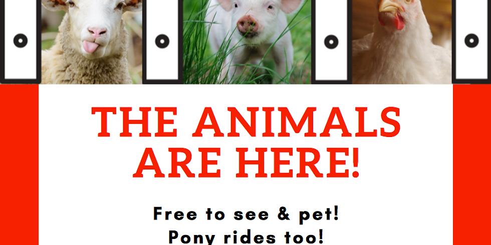 Free Petting Zoo