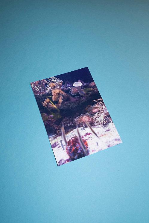 """Würmli"" Postkarte"