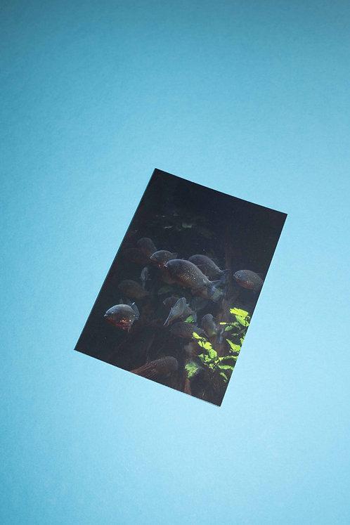 """""""Piranha"""" Postkarte"""