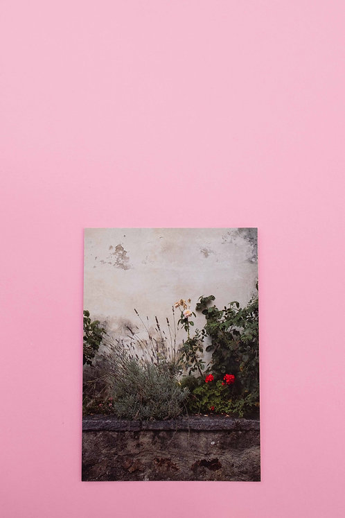 """Geranium"" Postkarte"