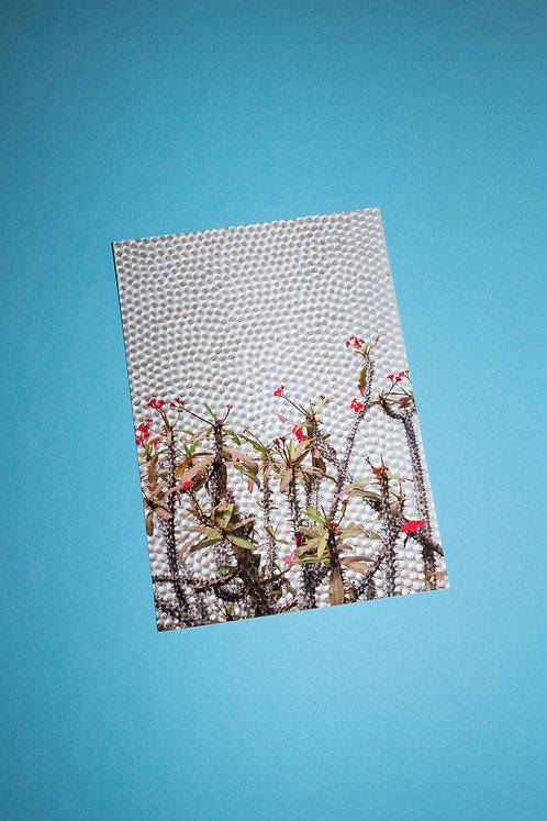 """""""Dornen"""" Postkarte"""