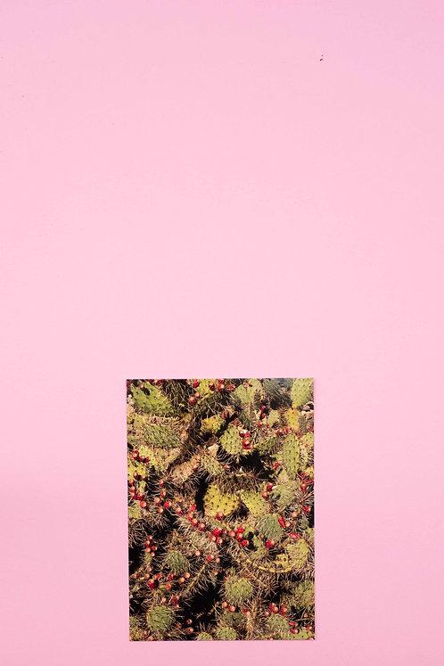 """Kaktus"" Postkarte"