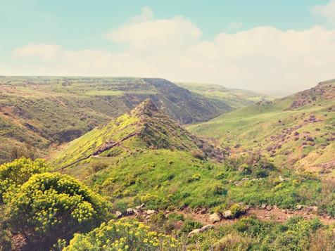 Gamla Nature Reserve.jpg