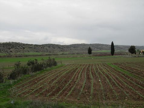 Valley of Elah David and Goliath.jpg