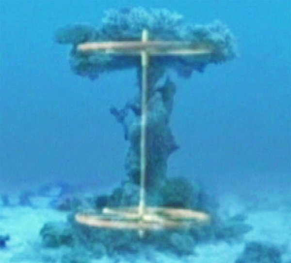 red-sea-coral-axle.jpg