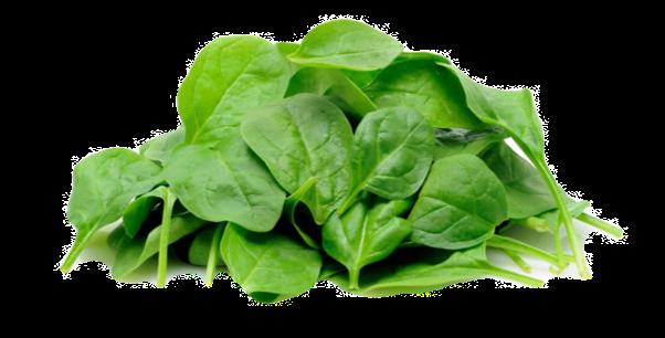 Salade de Pousse d'épinard - 125 Gr