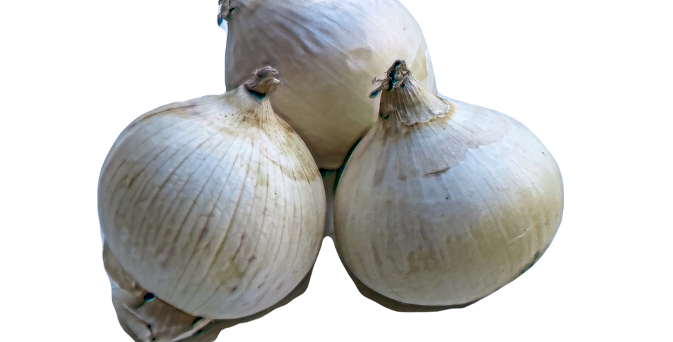 Oignon Blanc - 3 Pièces