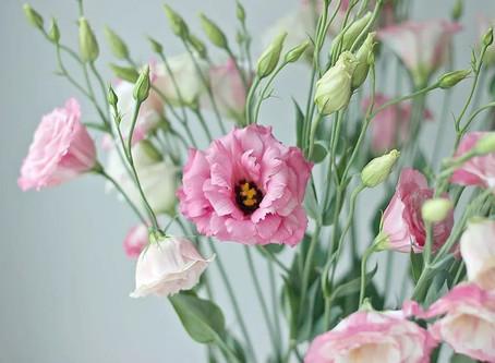 """Цветы и истории """"Эустома"""""""