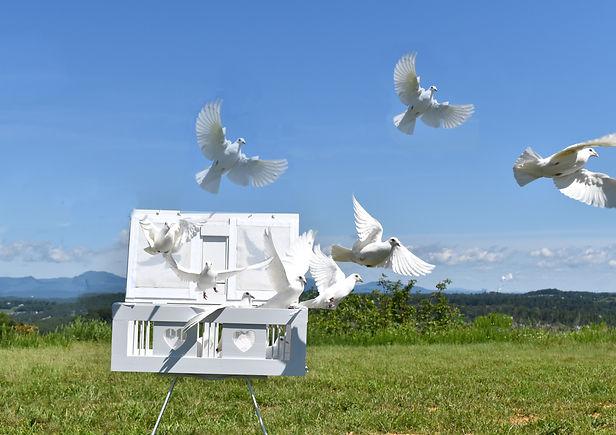 flock release white doves basket