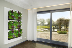 Living Walls Are Perfect for Homes!
