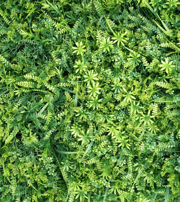 Ferns & Greens
