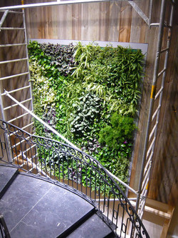 Gardening On Walls at its Best!