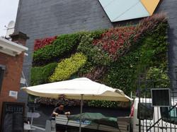 Colorado Loves Vertical Gardening!