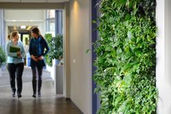 Gardening On Walls Make Employees :)