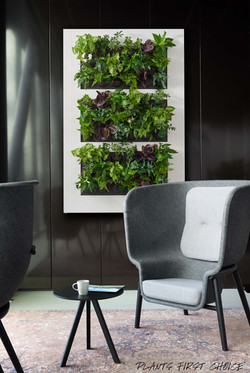 Living Walls are Beautiful.