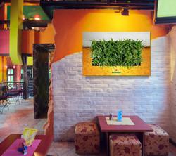 Gardening On Walls Customized!
