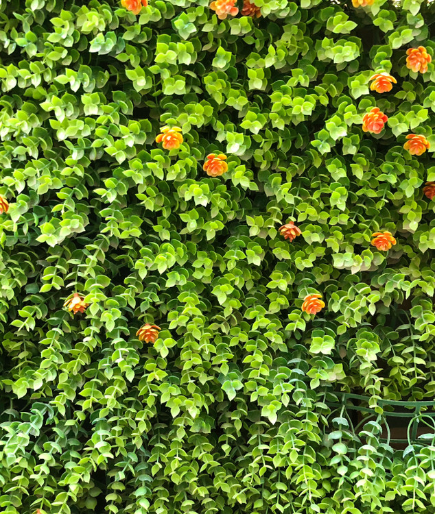 Leaf Fern & Orange Lollies
