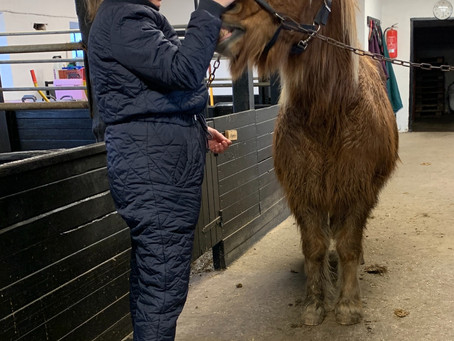 Heste Terapi - en historie fra stalden
