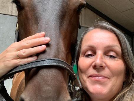 Kranio-Sakral-Terapi til heste