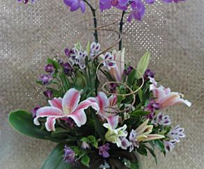 Arranjo com 2 orquídeas