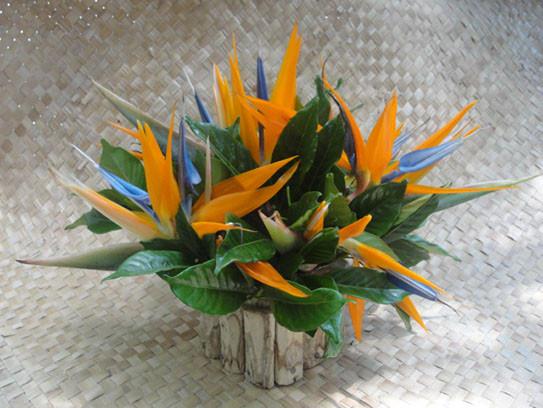 Strelitzia cache-pot rústico