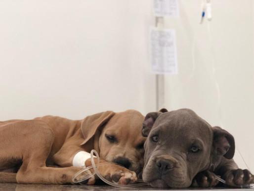 Estão abertas novas inscrições para castração de cães e gatos