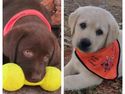 """Bolt e Atena, são os novos """"cãobatentes"""" dos bombeiros"""
