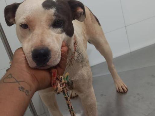 Em ação contra furtos em Ceilândia, policiais resgatam animais que sofriam maus-tratos