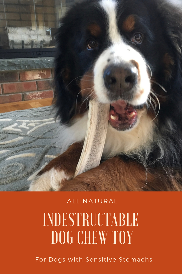Best indestructible dog toys for dogs with sensitive stomachs