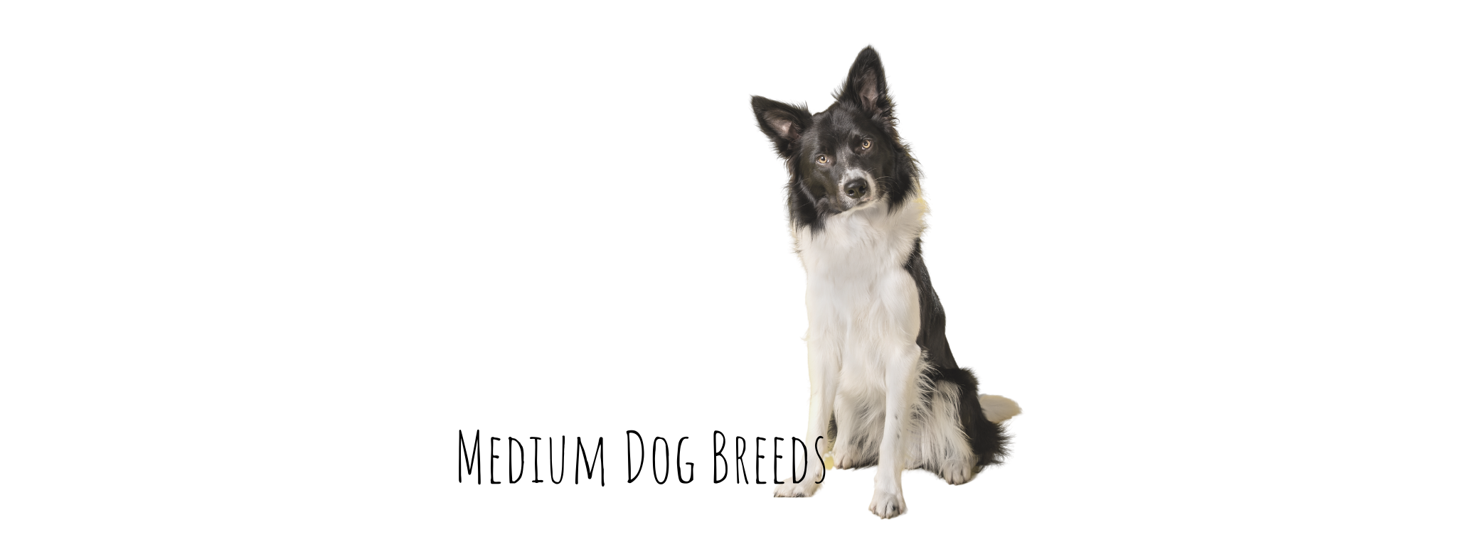 medium size dogs