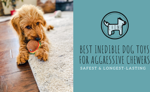 Best Non-Edible Dog Chews For Aggressive Chewers