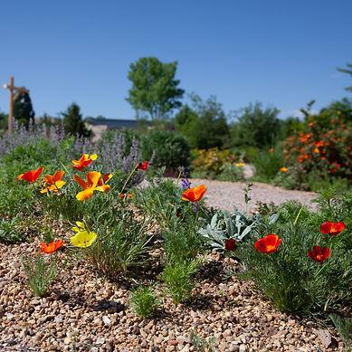 Cactus Garden and Rock Garden-7702.jpg
