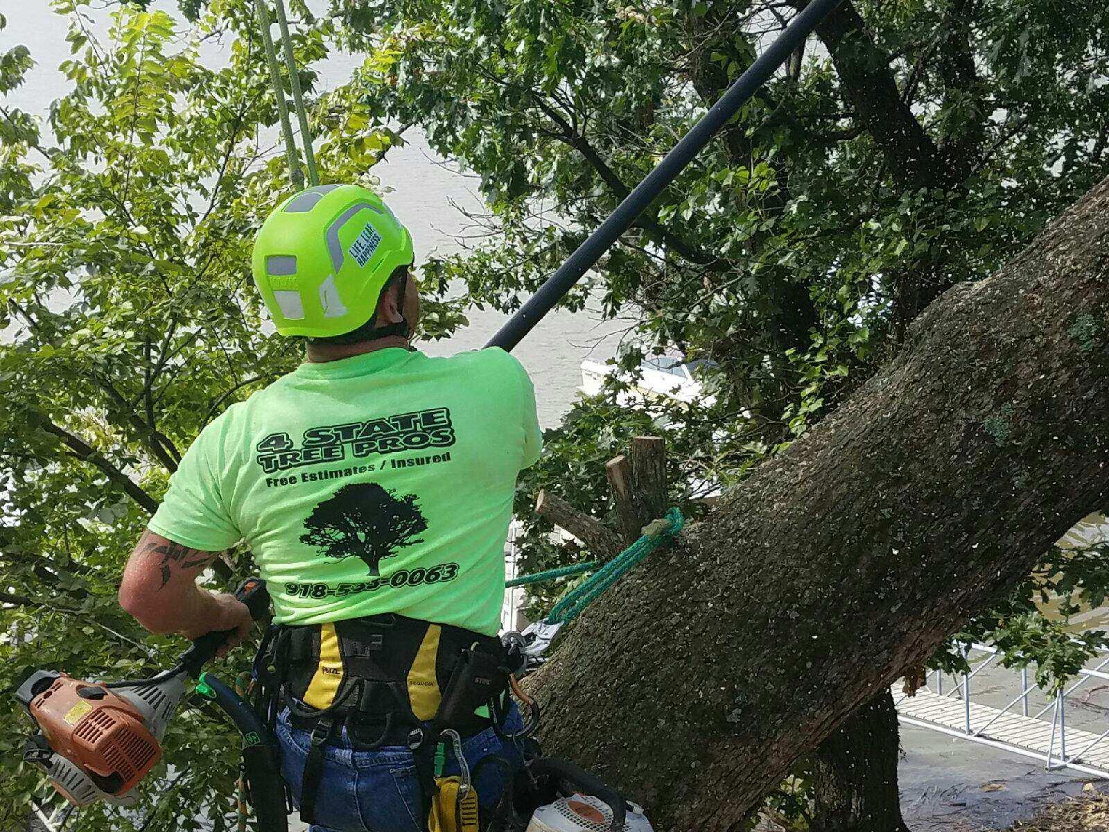 Tree saw 2