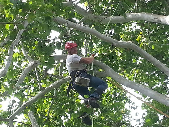 Jonas Washbush tree pruning and maintenance.
