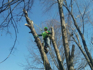 Treating trees that Winter temps have injured.
