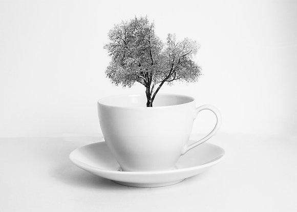 A cup of dreams - Árbol