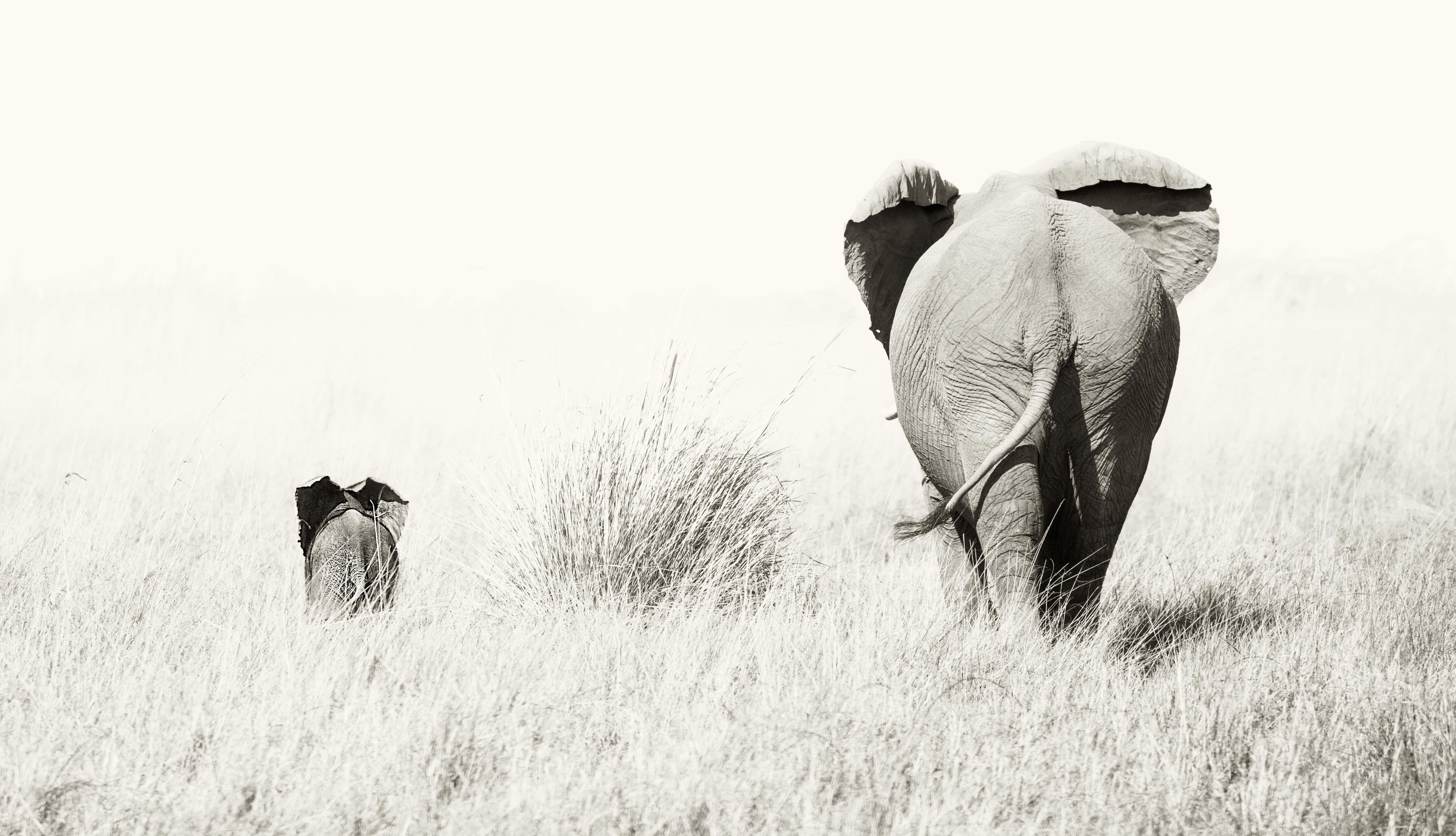 mama elefanta
