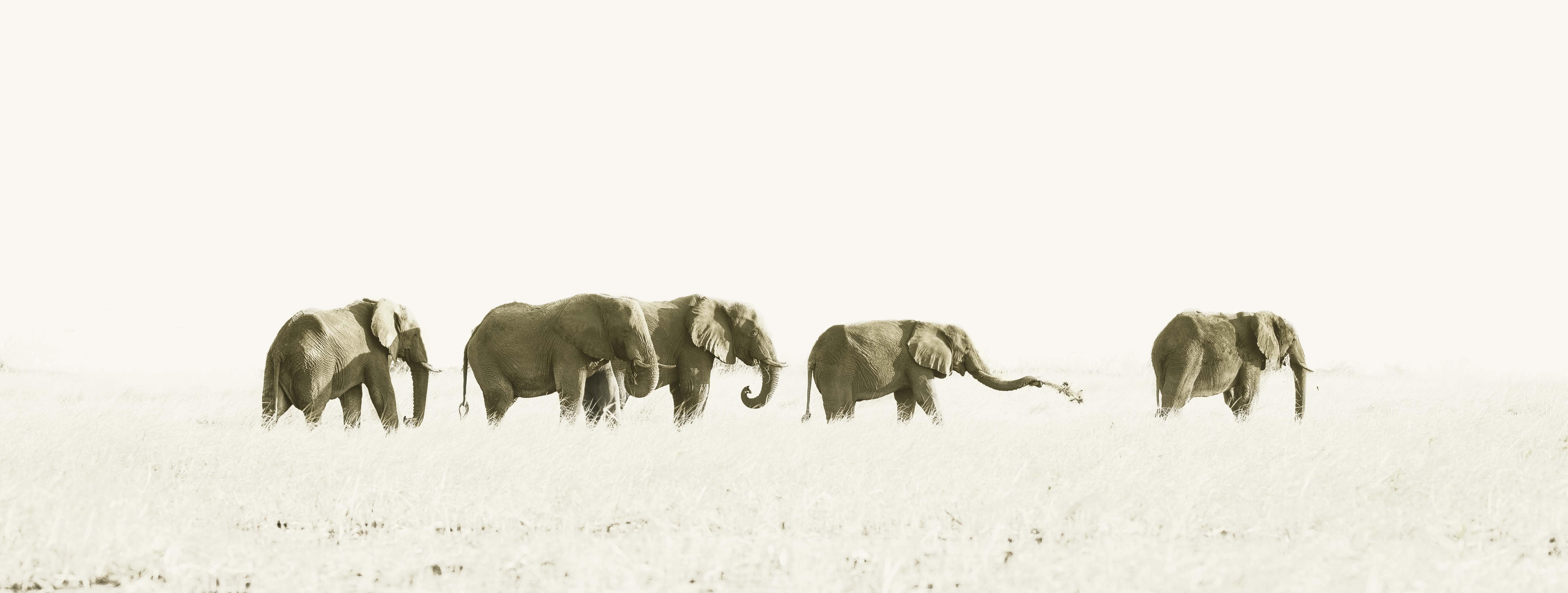 Elefantes linea