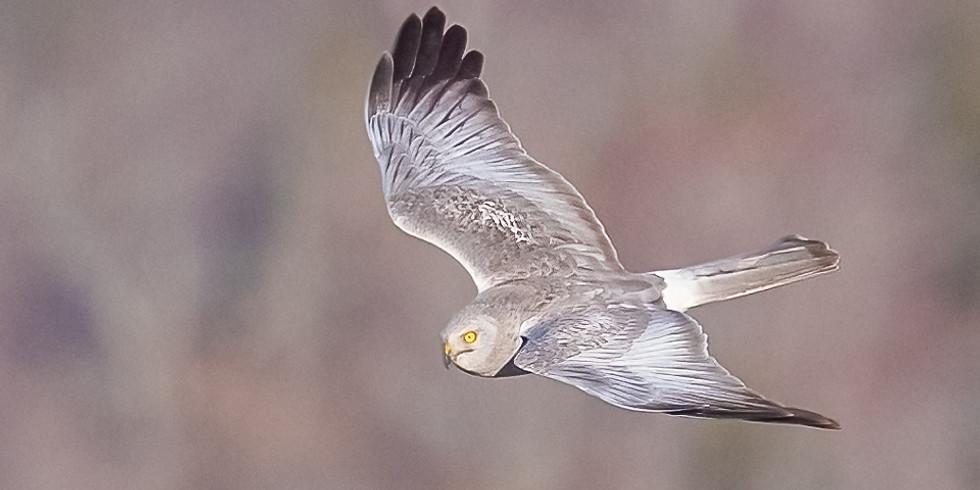 Live Animals with Chewonki - Predators: The Balance of Nature