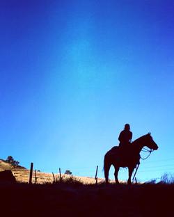 horse-shadw.jpeg