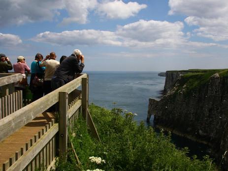 Upcoming RSPB Bempton Cliffs visit!
