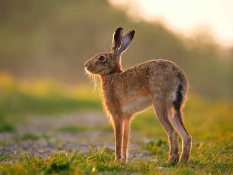 See my Hare shot in Norfolk Wildlife Trust's 2021 Calendar!