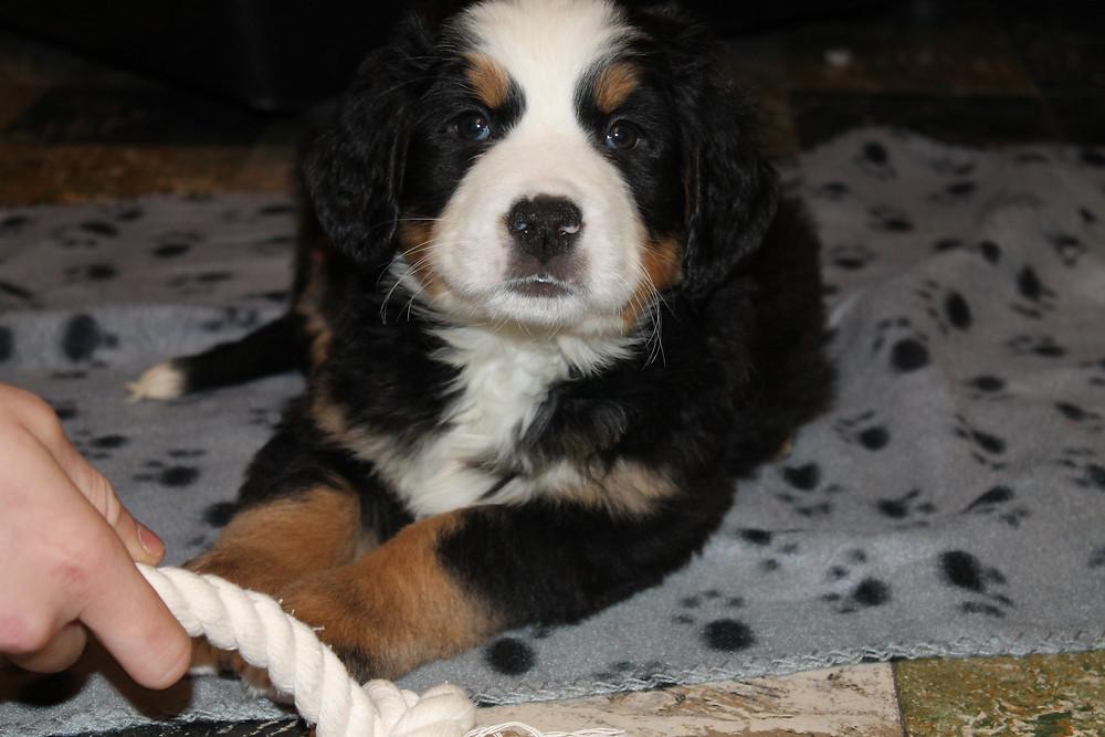 Hier zie je Mayla als pup!