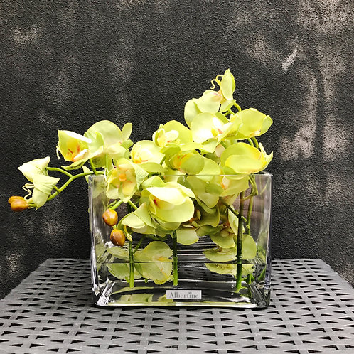 Light Green Phalaenopsis Orchid in rectangular vase design